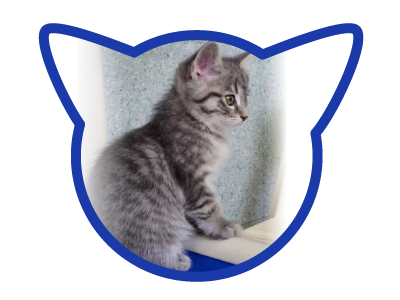 cat-adoption_01-20-18_marina