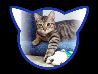 cat-adoption_01-20-18_randal