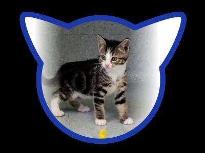 cat-adoption_01-20-18_reba