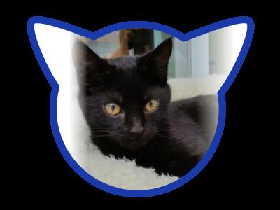 cat-adoption_01-26-18_ivette