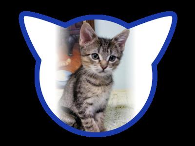 cat-adoption_02-13-18_larry