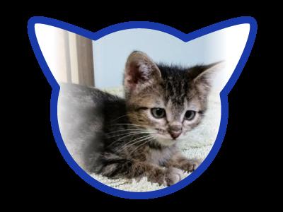 cat-adoption_02-16-18_girly