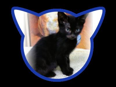 cat-adoption_02-16-18_mo