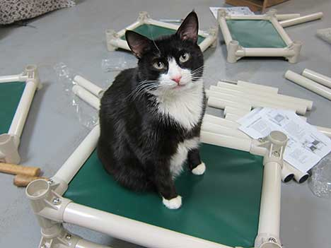 Donations needed: Kuranda Beds for our Cats