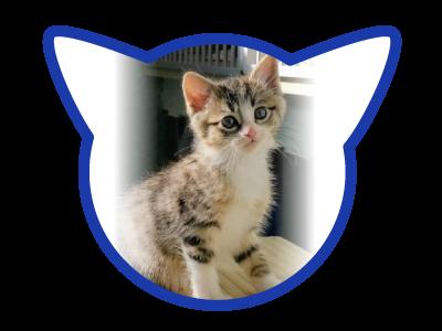 cat-adoption_01-17-18_ronan
