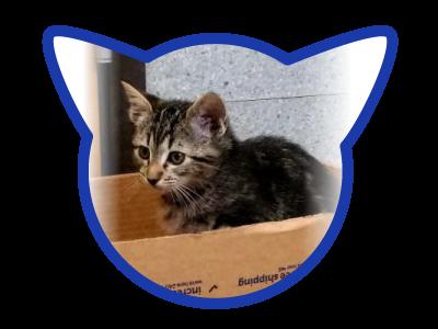cat-adoption_01-18-18_bosley