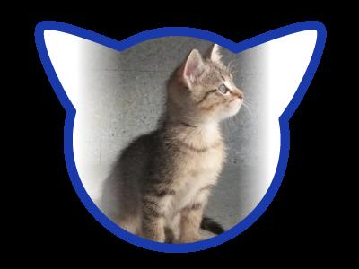 cat-adoption_01-18-18_coral