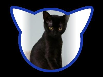 cat-adoption_01-18-18_obsidian