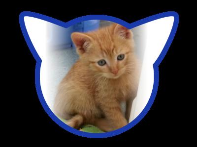cat-adoption_01-18-18_sailor
