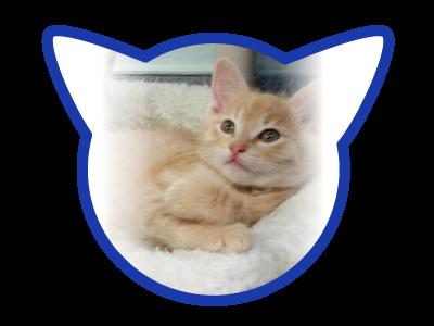cat-adoption_01-18-18_skipper