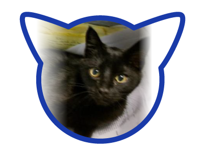 cat-adoption_01-23-18_ichabod