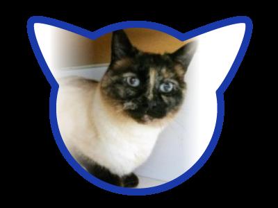 cat-adoption_01-27-18_mimi