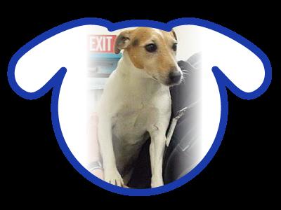 dog-adoption_01-23-18_lola