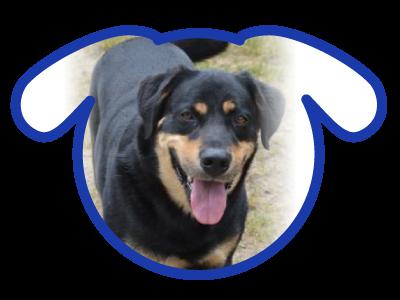 dog-adoption_01-24-18_tyler