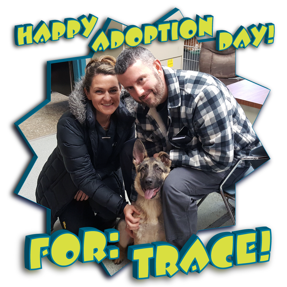Trace found his Forever Home!