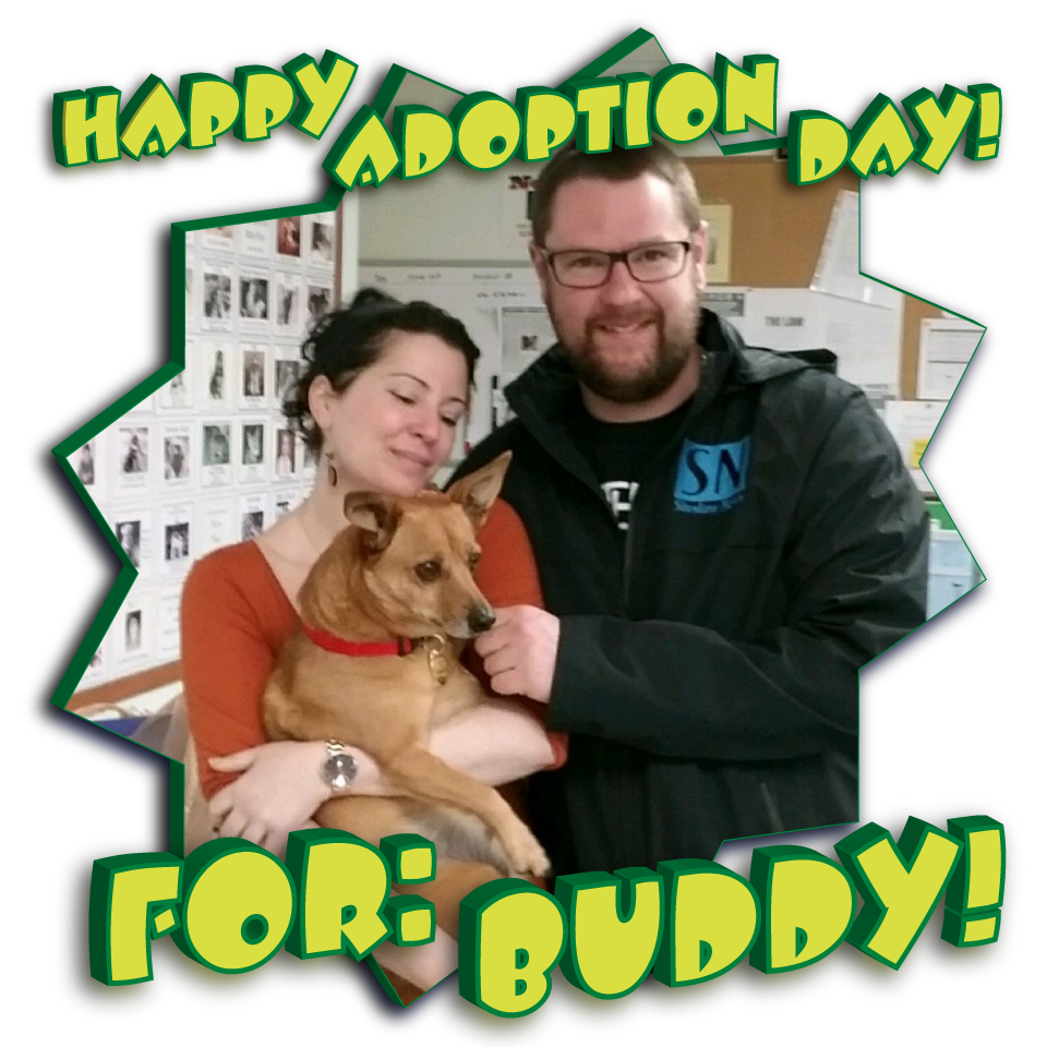 Buddy Found his Forever Home!