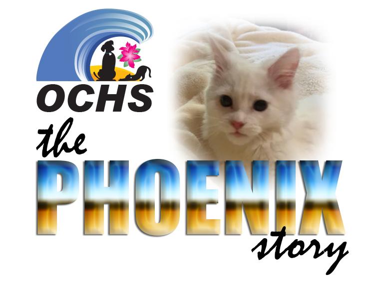 The Phoenix Story...